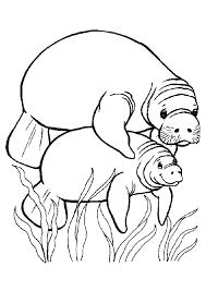 Une maman morse qui nage avec son bébé dessin à colorier