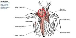 Shoulder Pain In Bench Press Strained Neck Trap Rhomboid While Bench Pressing Elitefts Q U0026a