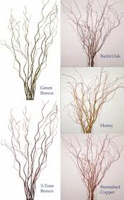 Curly Willow Branches 4 To 5 Ft Tall Dried Cut Curly Willow Bulk Pack Of 50 Stems