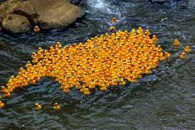 file ken ducky derby 2009 lot of ducks jpg wikimedia commons