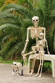 Halloween Skeleton Decoration Ideas 70 Best Crazy Bonez Skeletons Images On Pinterest Skeletons