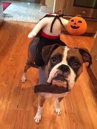 Large Halloween Costumes 33 Pets Halloween Costumes Flaunt Unique Halloween Style