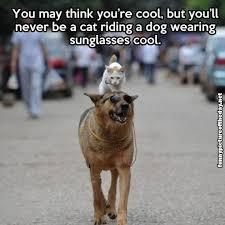 Cool Dog Meme - cool dog meme funny http whyareyoustupid com cool dog meme
