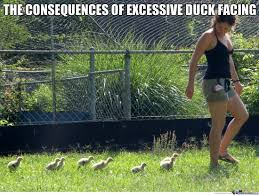 ducks memes best collection of funny ducks pictures
