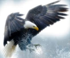 stellers sea eagle wallpapers eagle wallpaper hd android apps on google play