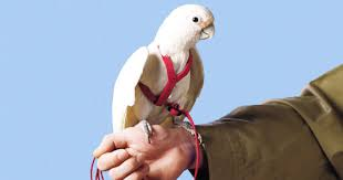 heat l for bird aviary taking your bird outside make every outdoor adventure safe and