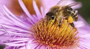 aviva assurances si鑒e social abeille assurances si鑒e social 28 images la vie sociale des