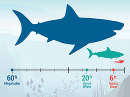 biggest megalodon shark megalodon shark facts the largest known ocean predator