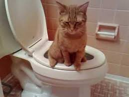 My Cat Peed On My Bed Cat In Toilet Youtube