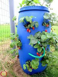 bureau à distance mac bureau a distance mac gracieux planter des fraises en pot 28 images