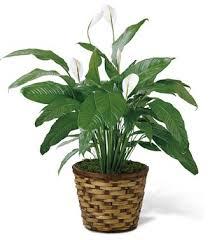 Best Online Flowers Flowerwyz Online Flowers Delivery Send Flowers Online Cheap