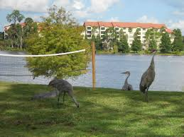 vista del lago rental gated community 5 vrbo