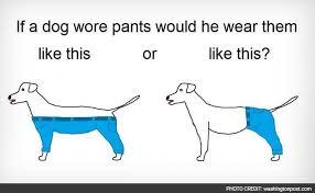 Meme Pants - how should a dog wear pants is the meme we deserve for the end of 2015