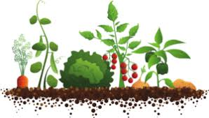 garden planning companion planting reiimmune the hydrobiotic