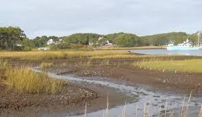 study finds crabs destroying coastal saltmarshes in rhode island