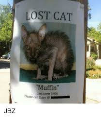 Lost Cat Meme - search lost memes memes on me me