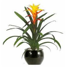 Indoor Flower Plants Flowering Plant Programs Artscape Interior Plant Specialists