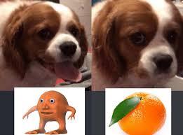 Orange Dog Meme - dog likes orange lad mr orange know your meme