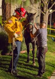 horse rescued after falling into hole while leaving riverside taco