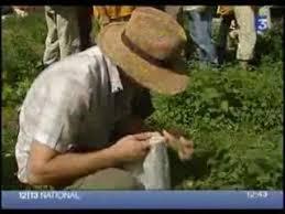 cuisine sauvage couplan l ethnobotaniste françois couplan présente la bardane vidéo