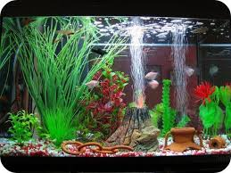 847 best aquarium fish images on aquarium ideas fish