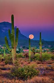Arizona is it safe to travel to dubai images Best 25 desert landscape ideas desert sunset jpg