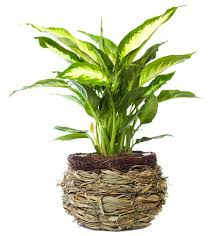 home interior plants 10 indoor plants that are poisonous and dangerous top 10 home