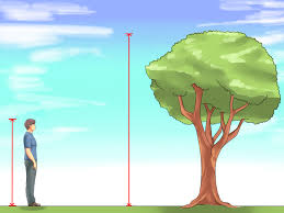 Judge A Tree By Its Fruit - 4 ways to measure the height of a tree wikihow