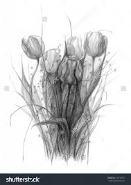 pencil shading of tulip flowers 1000 images about tulips to draw
