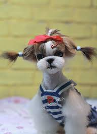 joypia yorkshire haircuts 48 best dog grooming ideas images on pinterest dog grooming dog