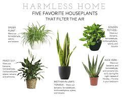 good house plants house plants purify air best air 7 boston fern