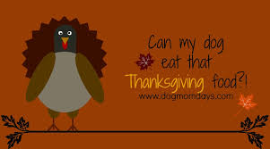 a pet parent s guide to thanksgiving food for dogs days