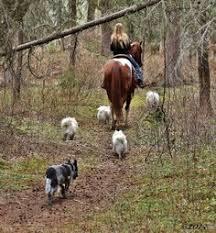 american eskimo dog breeders new england 3drose mug 153844 4 eskie dad american eskimo dog breed pet owner