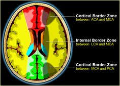 Axial Mri Brain Anatomy Cranial Nerves Anatomy Mri Axial Cranial Nerves Anatomy Free