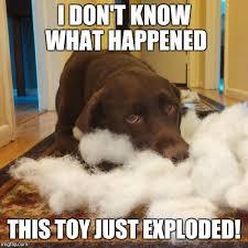 Dog Jokes Meme - 27 black lab dog jokes pug jokes