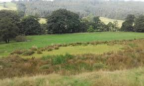 escape of the invasives top six invasive plant species in the invasive species the official blog for the north york moors