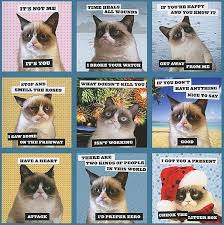 Grumpy Cat Meme I Had Fun Once - 63 best grumpy cat images on pinterest chistes funny things and