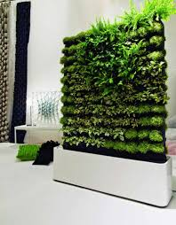 detail view of natural walls with green living plants home