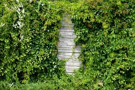 Garden Wall by Free Stock Photo Of Climber Garden Garden Wall