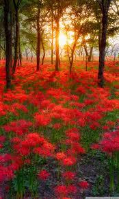 most beautiful sunsets in the world hd desktop wallpaper