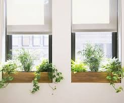 indoor windowsill planter indoor window boxes with leafy greens window gardens pinterest