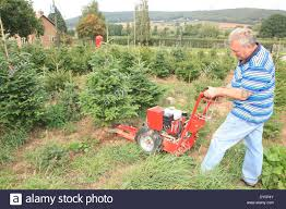 colin griffith the christmas tree grower cutting trees with a