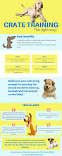 Do Cockapoo Dogs Shed A Lot by Best 25 Toy Cockapoo Ideas On Pinterest Cavapoo Puppies Poodle