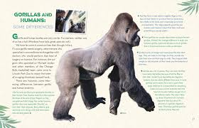 gorillas up close christena nippert eng macmillan