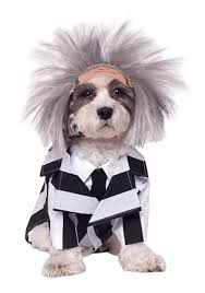 how to get in the halloween spirit halloween costume ideas for dogs festival around the world