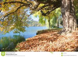 tree by the lake stock image image of colorful park 5715043