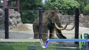 extinction resurrection woolly mammoth