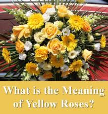 List Of Colours And Their Meanings All The Different Colors Of Roses And Their Meanings Hubpages