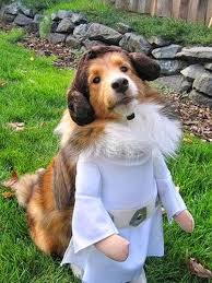 Funny Halloween Costumes Dogs 101 Halloween Costumes Dogs Images Animals