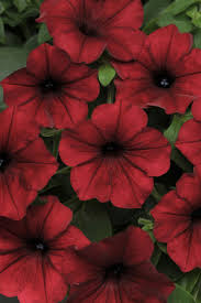 Beautiful Flowers 1466 Best Your Favourite Flowers Images On Pinterest